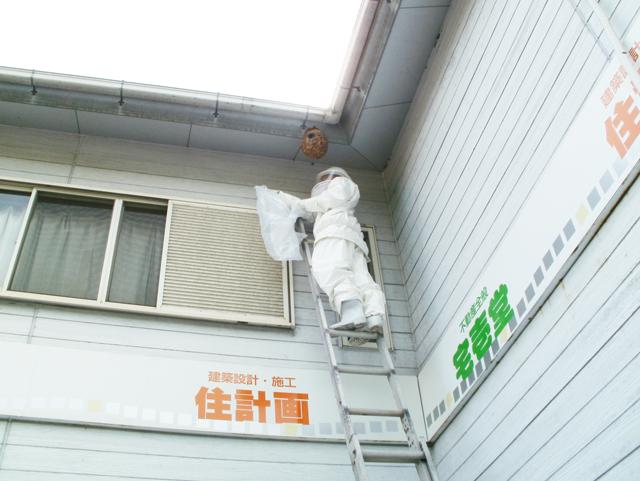 軒下・屋根下・高所のハチの巣