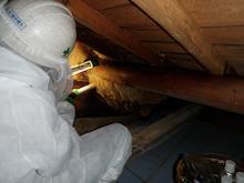 天井裏ミツバチの巣の除去