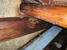 屋根裏 ミツバチの巣