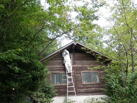 高島市 キャンプ場 でスズメバチ駆除